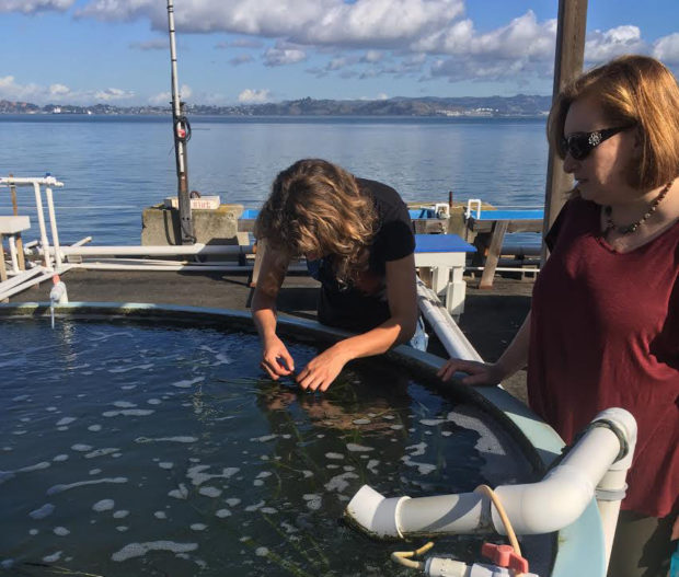 Margot Buchbinder, a graduate student (left), and Erin Blackwood, Education and Outreach Coordinator (right), stand by an experiment involving eelgrass at the Romberg-Tiburon Center for Environmental Studies. Photo by Jacob Shea.